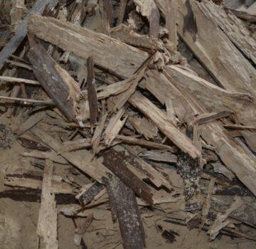 5. Abgebeiltes, befallenes Holz